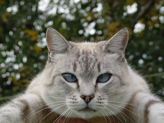 anabolic steroids in cats