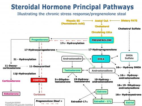 adrenal steroids pathway