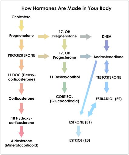 metabolic pathways diagram with cholesterol single phase motor wiring diagram with capacitor start pdf