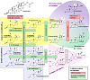 On TRT, Need Help - First Time Poster-steroid-synthesis-pathways.png
