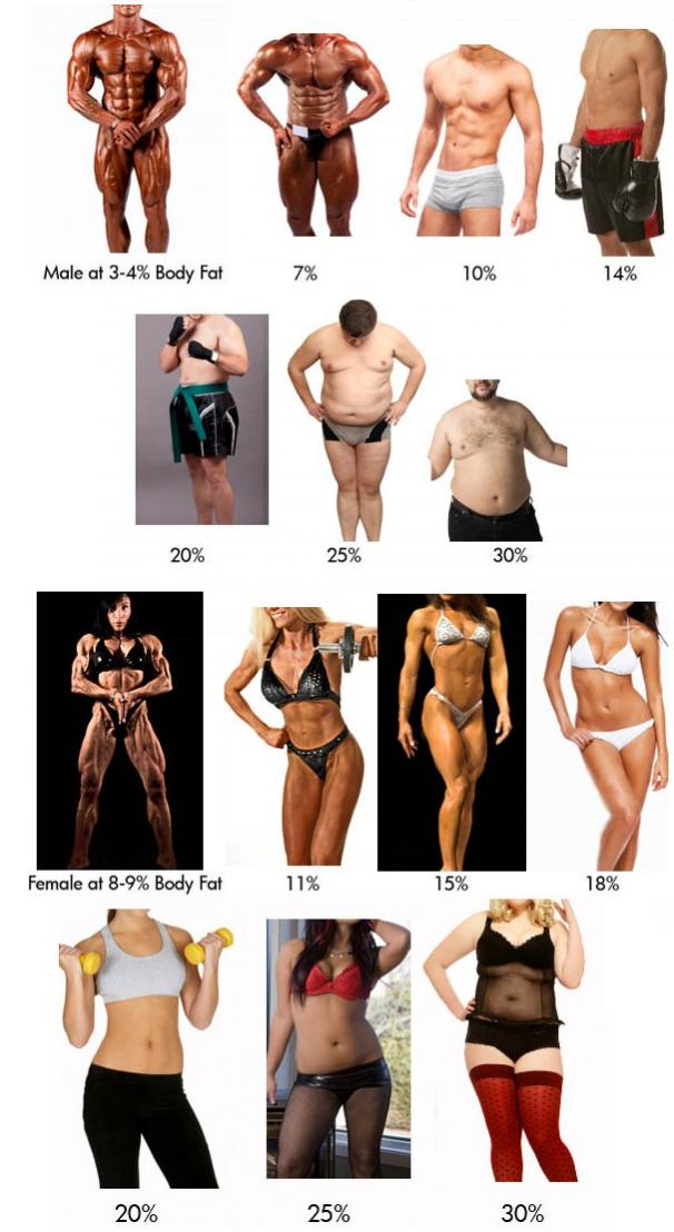 a comparison of men and women The most obvious difference between men and women is their physique, which translates to very large differences in physical prowess a 2010 review by anthropologist david puts has captured.