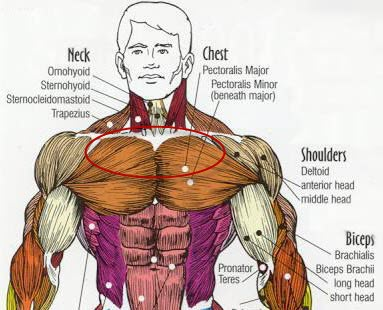 What Is The Best Exercise To Put M On Upper Chest Chestbig Jpg