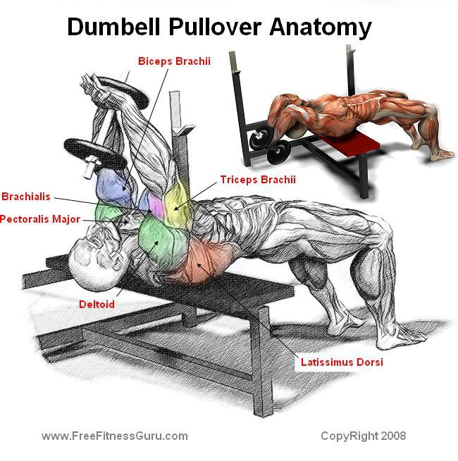 Photo Collection Dumbbell Pullover Form
